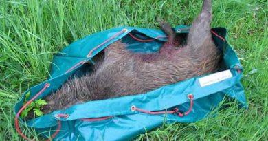 Wildwanne faltbar – Bergehilfe Jagd